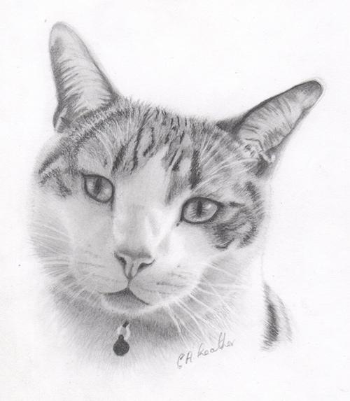 Graphite cat portrait