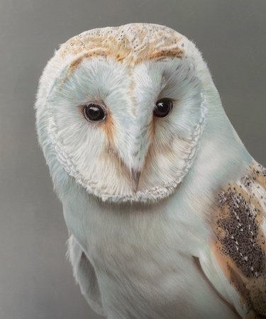Barn Owl competition entry